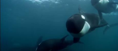Blackfish Official Trailer #1 (2013) - Documentary Movie HD - Image credit- Movieclips Trailer | Youtube