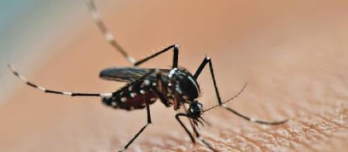 Curiosidades sobre insetos que provavelmente você não sabia