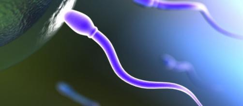 TECNOXPLORA | Factores que afectan a la calidad del semen - lasexta.com
