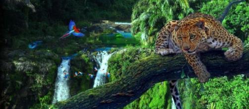 A Floresta Amazônica é repleta de biodiversidade