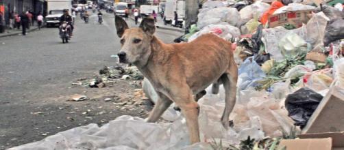 La grave crisis que vive el país suramericano afecta también a las mascotas