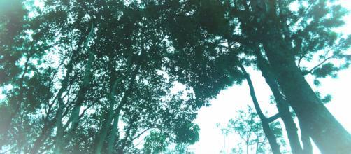 De uma forma meio estranha, árvores me lembram felicidade
