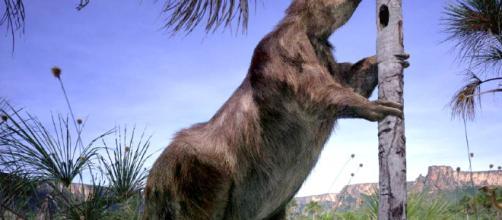 Preguiça-gigante habitou o Brasil na Pré-história