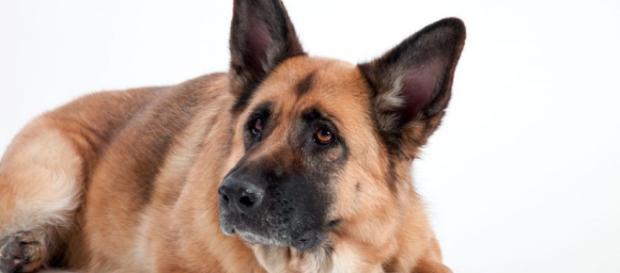 Cane e peso forma: come capire il peso ideale del tuo cane - husse.it