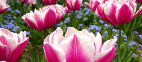 I fiori come i libri ci aprono al pensiero