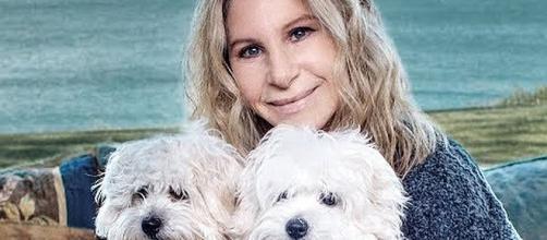 Barbra Streisand cloned her deceased pet twice. [Image source: Variety/YouTube screenshot]
