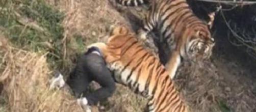 Funcionário de zoológico é sufocado até a morte por tigre