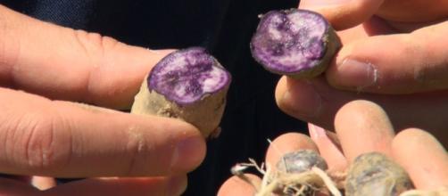 Ines Dundovic, de acuerdo con un experto agrónomo, y su socio economista Jan Marinac, vieron su oportunidad en la agricultura.
