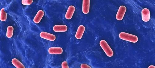 L'assunzione di probiotici contrasta le malattie gastrointestinali.