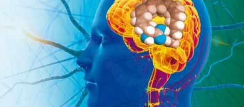 El poder regenerativo del cerebro adulto — DSalud - dsalud.com