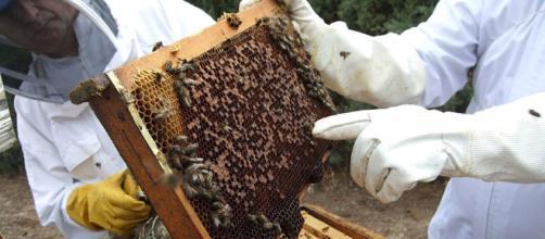 En Bjelovar, los apicultores de toda Croacia y ocho países europeos se reunieron para presentar todo lo que las abejas pueden producir.