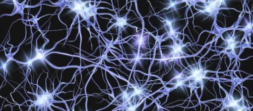 TV A CONFRONTO - Pagina 2 In-alto-i-neuroni-del-cervello_1886805