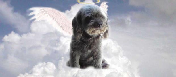 Pregunta: ¿Las mascotas van al cielo?