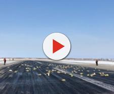 I lingotti d'oro ritrovati sulla pista di Yakutsk