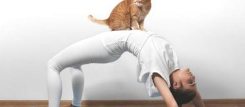 Yoga con gatitos, nueva moda para liberar estrés - El Diario de ... - eldiariodevictoria.com