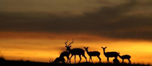 El cambio climático se ceba con las especies ya más amenazadas ... - elpais.com