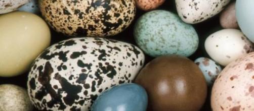 He aquí por qué diferentes huevos de aves tienen diferentes formas