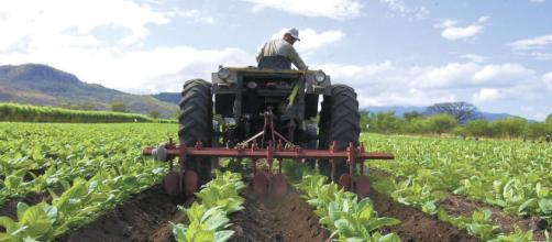 La nueva agricultura para Nueva Zelanda