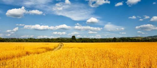 Problemas económicos, ponen en riesgo la agricultura de Ucrania