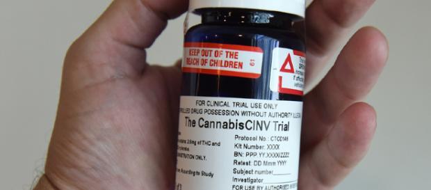 Cannabis News Asia - Pacific Archives - [Marapharm TV/Youtube]