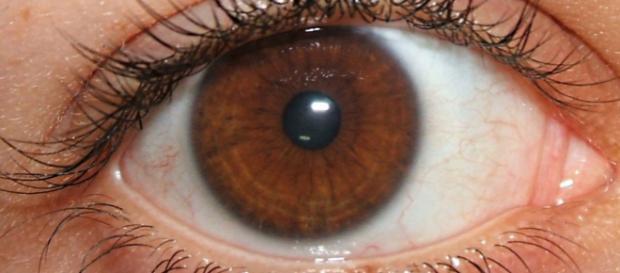 Entenda o motivo dos olhos castanhos serem considerados especiais