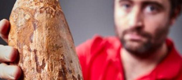 Hallan un enorme diente de cachalote de cinco millones de años en ... - lainformacion.com