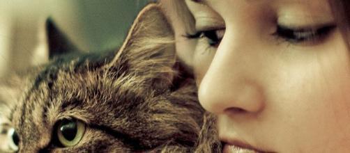 Los investigadores han rastreado el linaje del felino doméstico a una antigua especie de gato y algunas civilizaciones