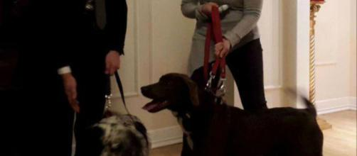 Terremoto: adottati Jack e Lola, i due cani ora salvano i ... - velvetpets.it