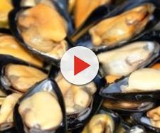 Cozze in arrivo dalla Spagna contaminate: allerta nei supermercati italiani