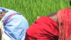 Startups de Clever Agritech ayuda a los agricultores de la India