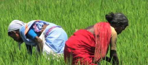 Con la tecnología, los agricultores pueden comercializar mejor sus productos