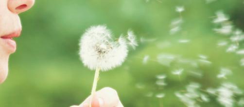 La primavera, el polen y la temida alergia