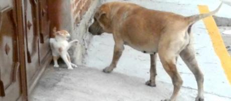 Dogs Vs. Cats: which are smarter?