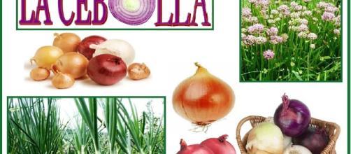 LA CEBOLLA | Las Plantas Curativas de Dios - wordpress.com