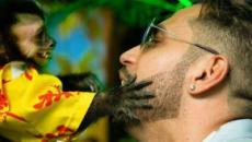 Twelves, macaco do cantor Latino, morre atropelado e deverá ser cremado