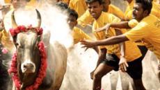 Prohibición de festival en la India enciende la ira de sus pueblos