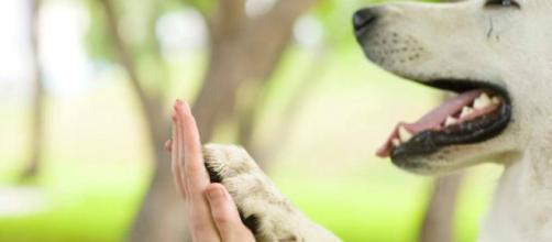 4 razones por las cuales no debes tratar a tu mascota como un bebé
