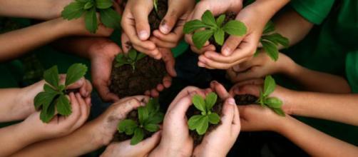 Cuidar el medio ambiente es una tarea de todos. Public Domain.