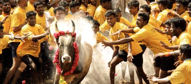 Now Aadhaar mandatory for Jallikattu in Madurai   Tamil Nadu News - india.com