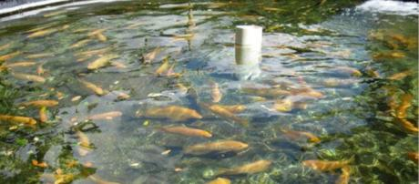 Fish farming - Image credit - Bytemarks | Flickr