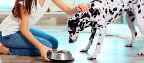 Alimenta adecuadamente a tu mascota, con estos consejos | Medicina ... - medicinaquetemueve.com