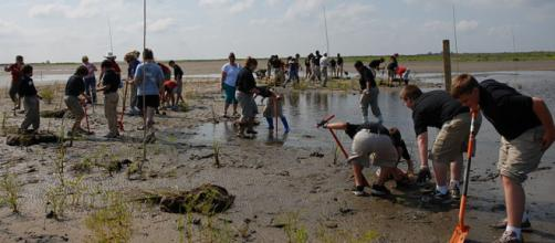 Louisiana loses its wetlands to erosion at a rate of nearly 25 square miles a year (Image credit – Louisiana GOHSEP, Wikimedia Commons)