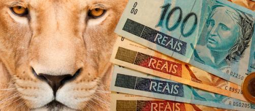 O Leão está de olho nos seus rendimentos
