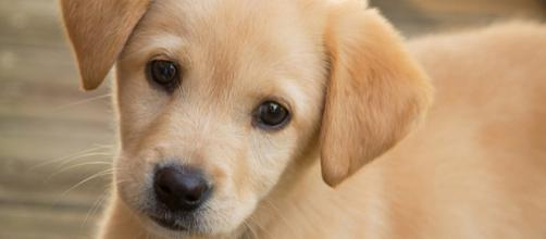 Today is all about the puppies! [Image Credit: Mashable Watercooler/YouTube]