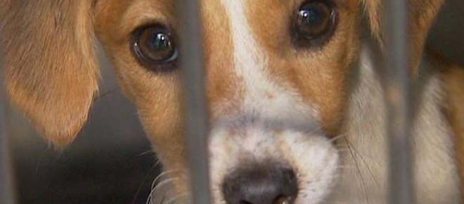 Em Curitiba, ONGs incentivam adoção de cães abandonados