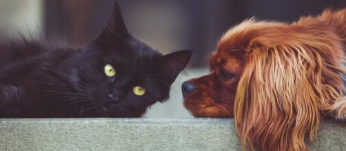 It was discovered that euthanized cats and dogs were being used as a pet food ingredient [Image credit: Pixabay]