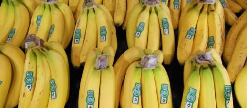 El hongo mortal puede ser combatido por los bananos transgénicos