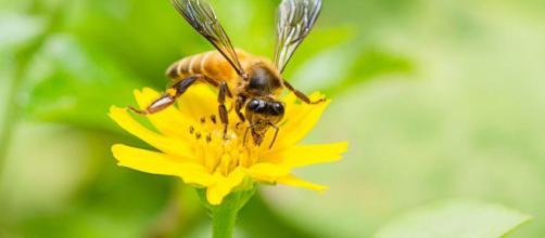 insectos tienen una visión más clara de lo que se pensaba anteriormente