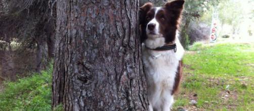 Las razas de perros más inteligentes | Mascotas - facilisimo.com