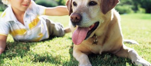 mejores razas de perros que puedes tener como mascotas